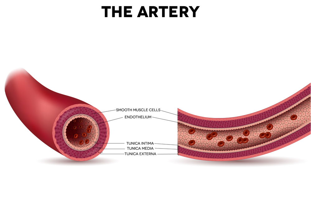 Age Protects Blood Vessels' Inner Layer From Oxidative Damage